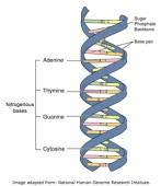 DNA 27 DNA