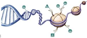 Methyl  gene
